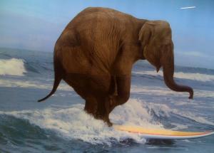 Foto: Lykkelig elefant som ble lempet ut av stua under et familieselskap.